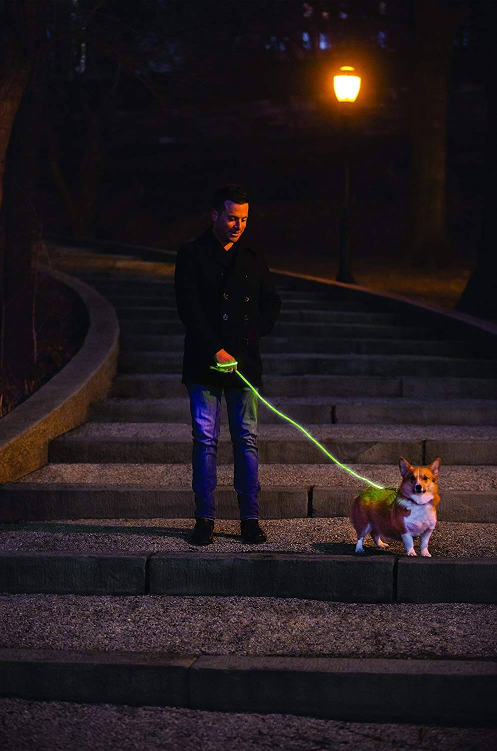LED Glow in The Dark Pet Dog Leash