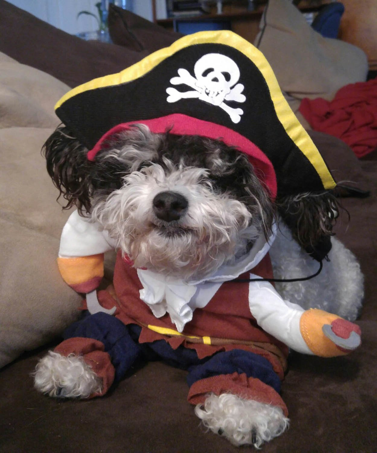 Caribbean Pirate Pet Costume